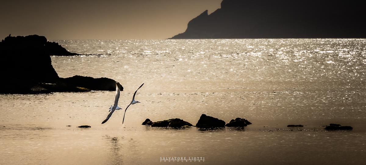 gabbiani volano sfiorando il mare al tramonto