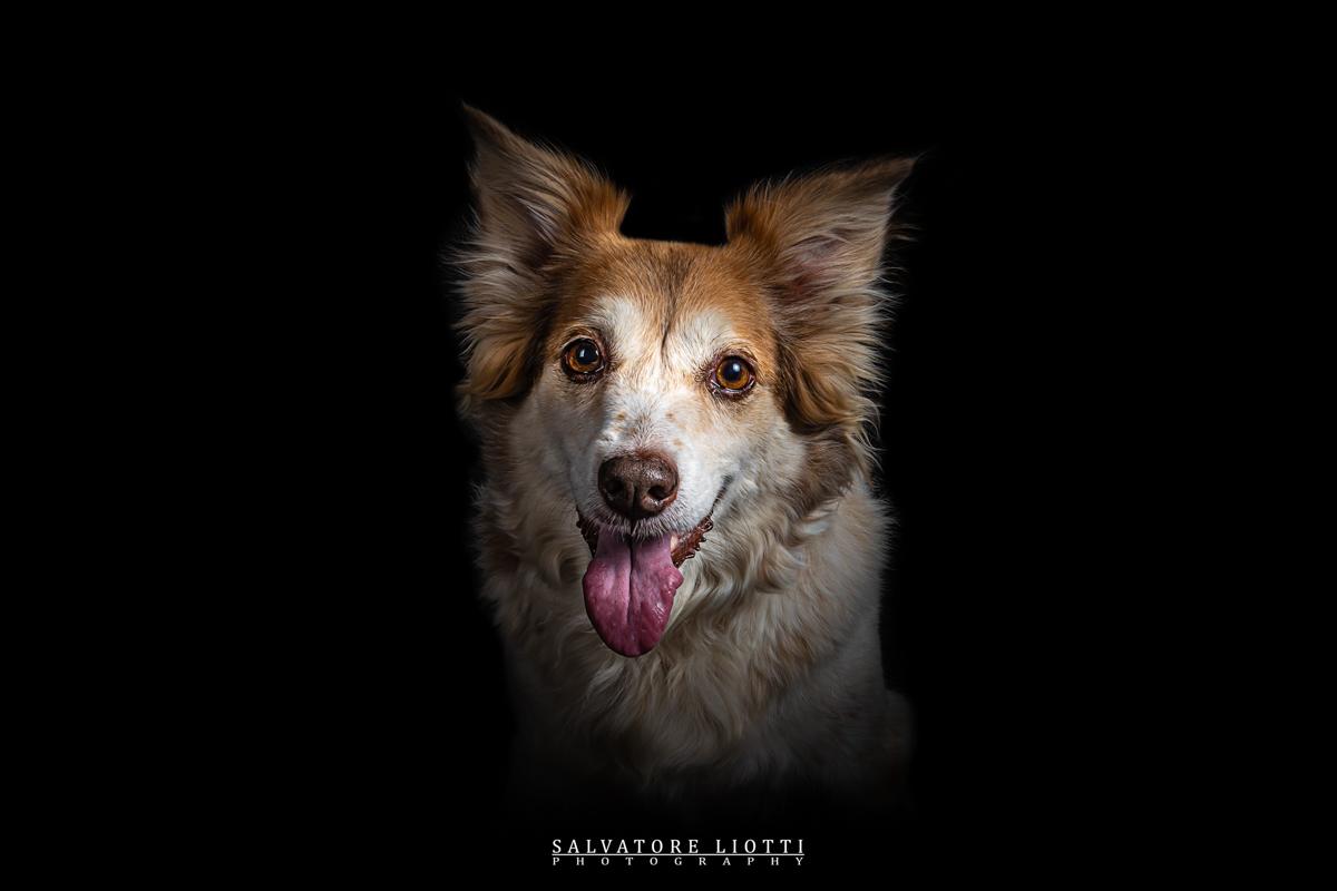 cane felice con lingua esposta