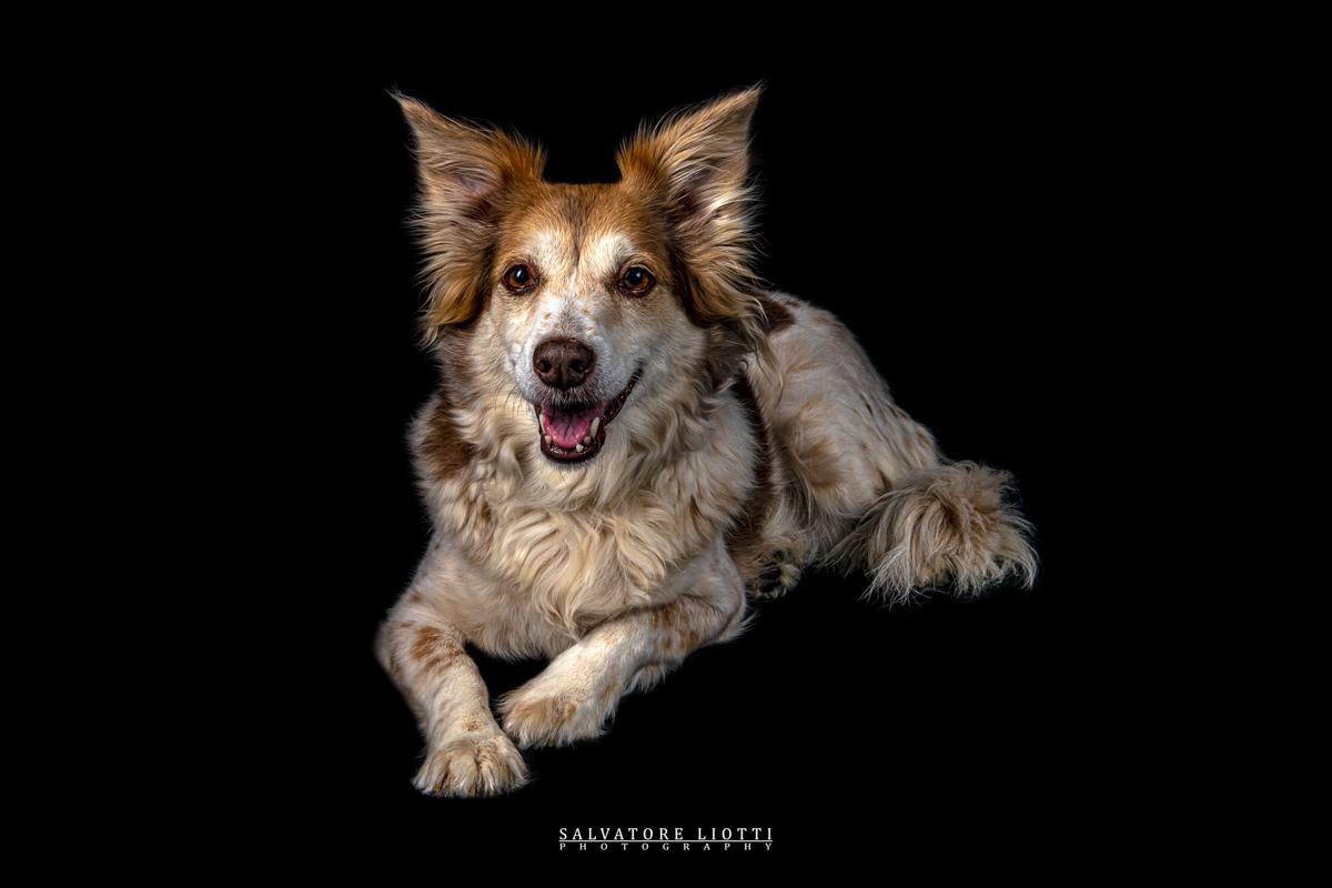 cane felice in posa sdraiato