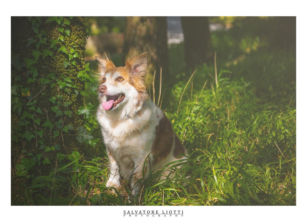 cane contento seduto nel boschetto