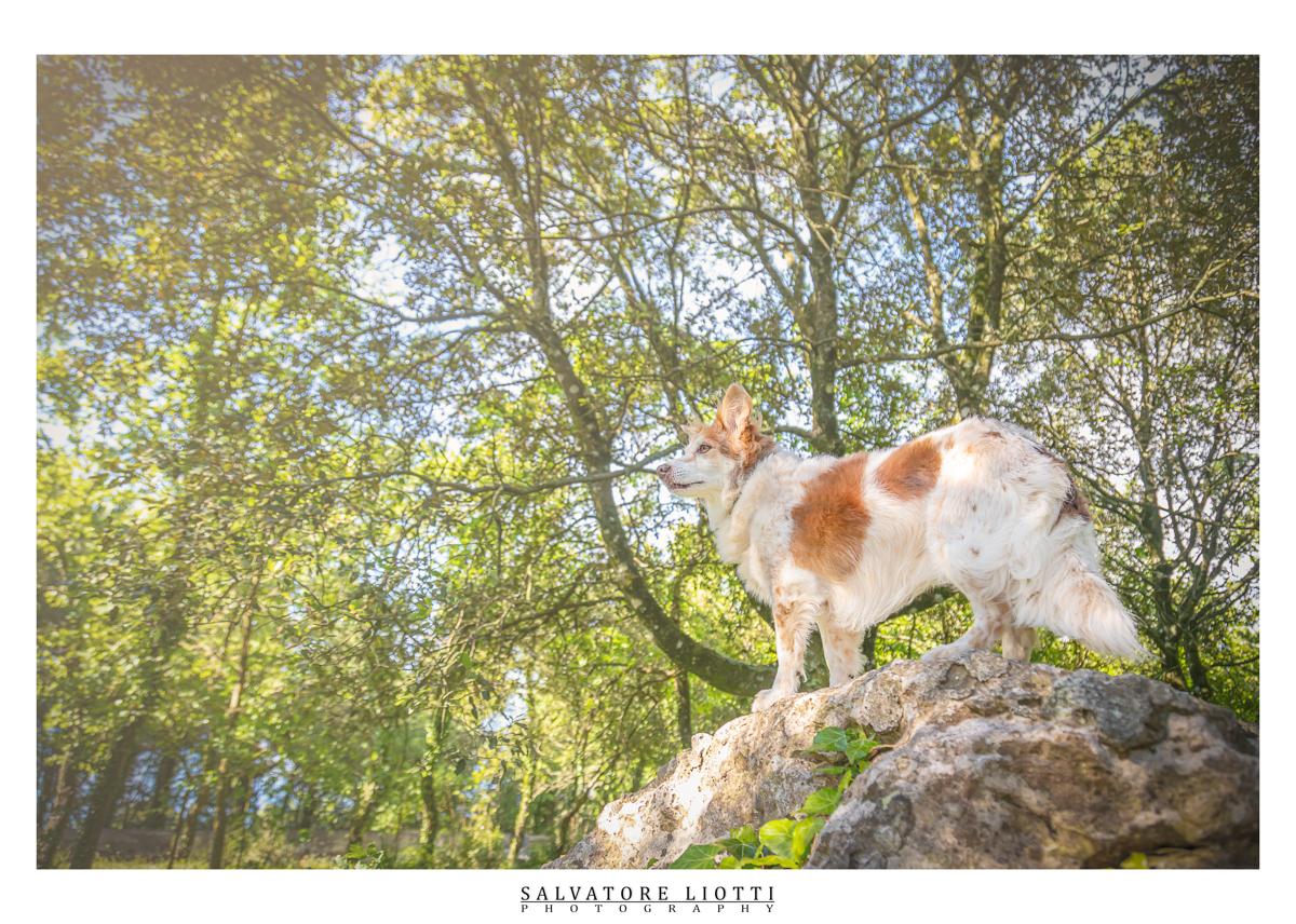 cane sopra una roccia nel boschetto